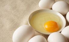 鶏卵のランペップ
